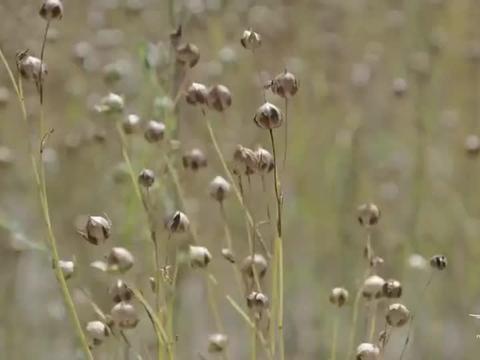 风味原产地:沙漠的风,快速带走一切水分