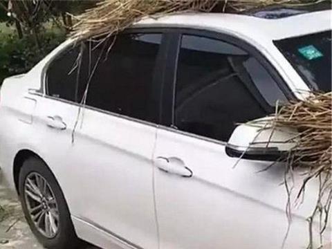 农村院子里一辆宝马车, 车顶晒秸秆, 网友: 贫穷限制了我的想象力