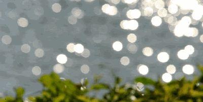 成都湿地公园:有湖有岛、有花有树、有鸟有鱼,露营烧烤,无门票