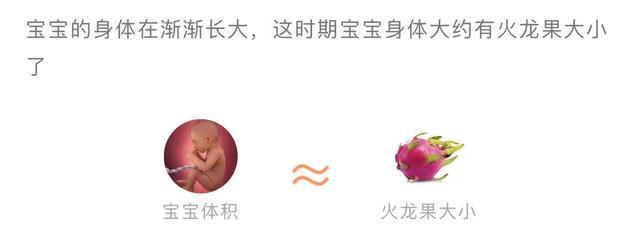 孕32周的胎儿有多大?怀孕32周的宝宝发育指标标准