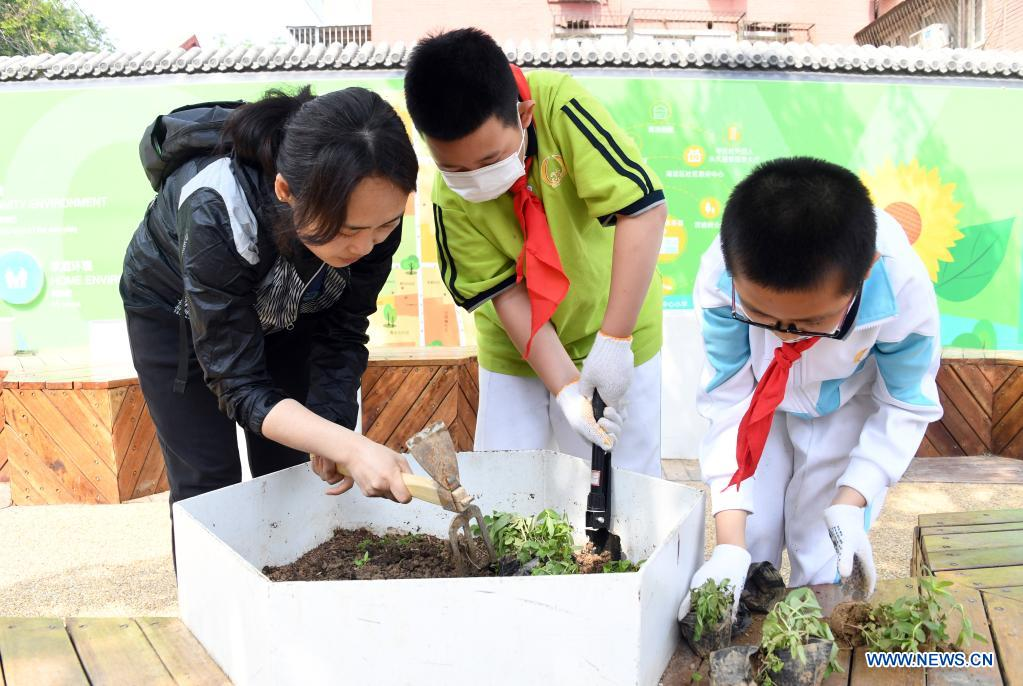 A staff member guides pupils to plant in Haidian District of Beijing, capital of China, May 11, 2021. (Xinhua/Ren Chao)