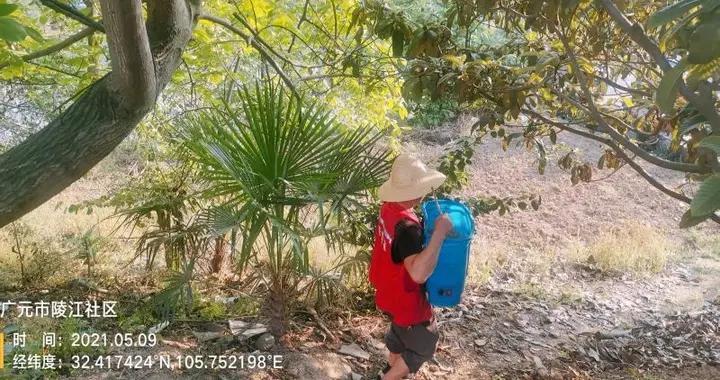 红火蚁、稻瘟病……四川如何防控植物疫情和农作物重大病虫害?