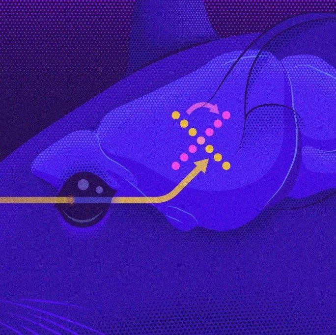 """科学家揭秘大脑靠""""旋转""""区分过去和现在,还给了个AI架构设计新思路   Nature子刊"""