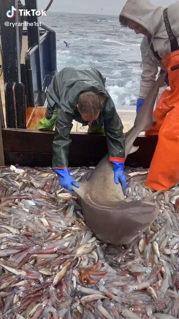 """船员误捕到一条鲨鱼,结果鲨鱼在甲板上疯狂""""干饭""""……"""