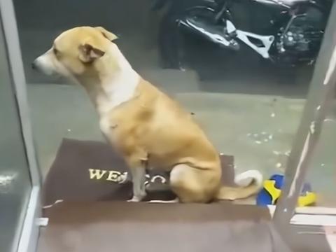 """男子邀请流浪狗进店避雨,它却""""毕恭毕敬"""",狗:雨小了就走"""