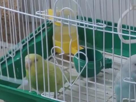 小鸟能有什么坏心思,只不过想越狱罢了,离家出走看外面的世界