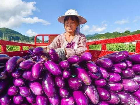 磷酸二氢钾+白醋,喷在辣椒茄子等蔬菜上,会出现意想不到的效果