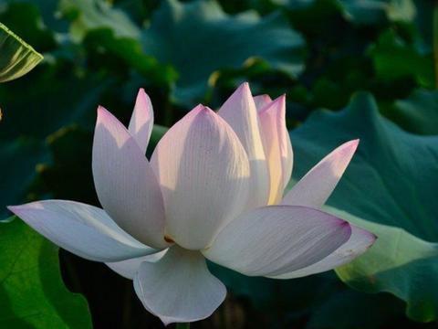 微笑着,迎向爱情的五月末,桃花盛开,真情占满了心