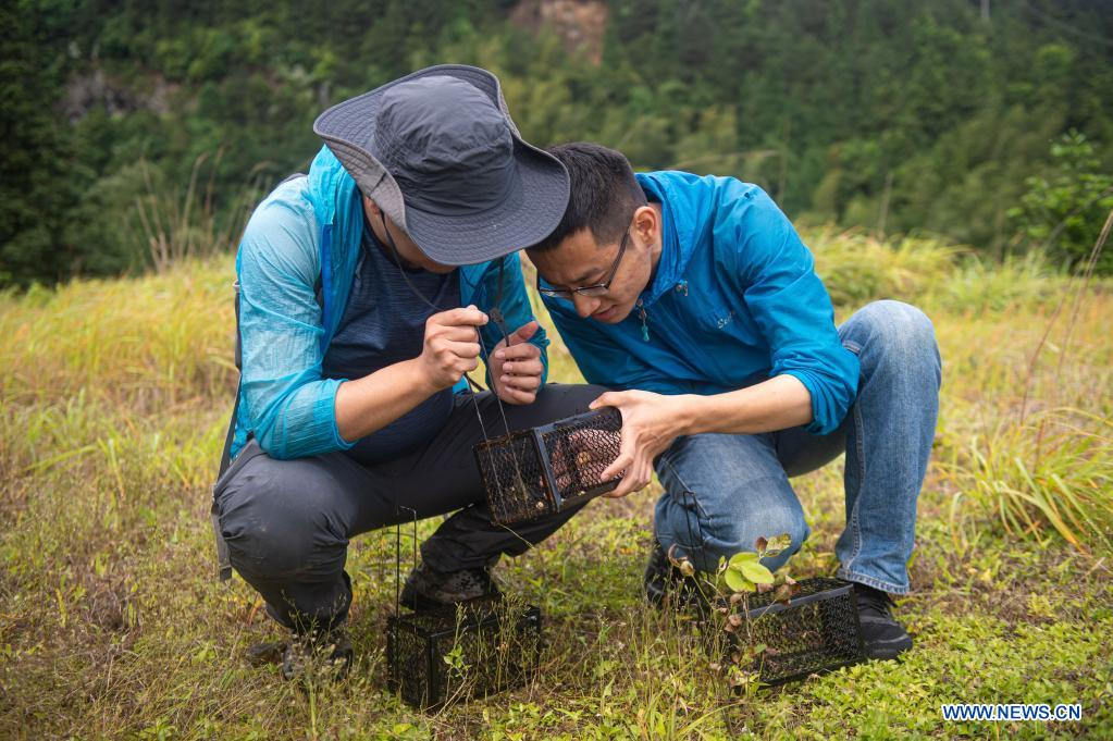 Researcher Yong Fan from Nanjing Institute of Environmental Sciences (L) and assistant Liu Yukun check traces of animal activity on a trapping cage in Longquan City of east China's Zhejiang Province, May 12, 2021. Located in the mountainous area in southwestern Zhejiang Province, Longquan City enjoys a favorable ecological environment and is known for its abundant biodiversity resources in east China. At present, the Nanjing Institute of Environmental Sciences under the Ministry of Ecology and Environment is organizing experts to continuously investigate the biodiversity in Longquan City. It will set up an electronic catalogue of specimens and a database for the species here, so as to lay a foundation for comprehensively improving biodiversity protection. (Xinhua/Jiang Han)