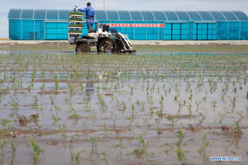 An unmanned transplanter works in a rice paddy in a smart agriculture demonstration zone administered by Hongwei Farm Co., Ltd. of Beidahuang Group in northeast China's Heilongjiang Province, May 11, 2021. Equipped with a self-driving system based on the Beidou Navigation Satellite System (BDS), the smart transplanter can independently finish rice transplanting, avoid obstacles and turn around when needed. (Xinhua/Zhang Tao)