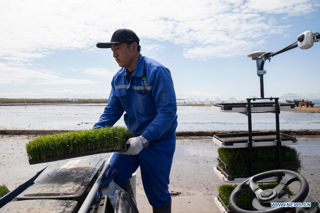 A staff member fills an unmanned transplanter with rice seedlings in a smart agriculture demonstration zone administered by Hongwei Farm Co., Ltd. of Beidahuang Group in northeast China's Heilongjiang Province, May 11, 2021. Equipped with a self-driving system based on the Beidou Navigation Satellite System (BDS), the smart transplanter can independently finish rice transplanting, avoid obstacles and turn around when needed. (Xinhua/Zhang Tao)