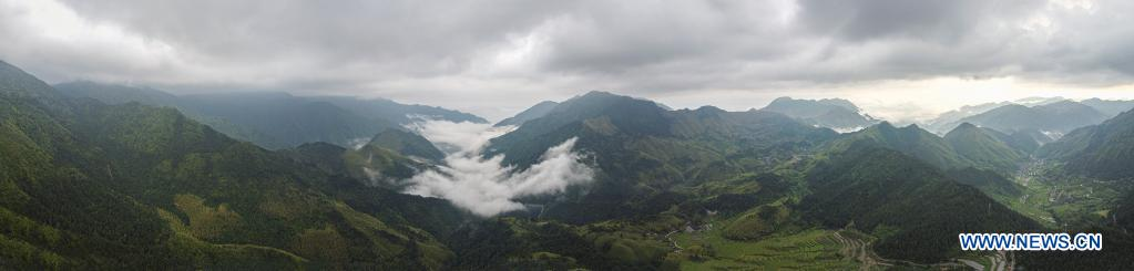 Aerial panoramic photo taken on May 12, 2021 shows the view of the Fengyang Mountain and Baishanzu national nature reserve in east China's Zhejiang Province. Located in the mountainous area in southwestern Zhejiang Province, Longquan City enjoys a favorable ecological environment and is known for its abundant biodiversity resources in east China. At present, the Nanjing Institute of Environmental Sciences under the Ministry of Ecology and Environment is organizing experts to continuously investigate the biodiversity in Longquan City. It will set up an electronic catalogue of specimens and a database for the species here, so as to lay a foundation for comprehensively improving biodiversity protection. (Xinhua/Jiang Han)