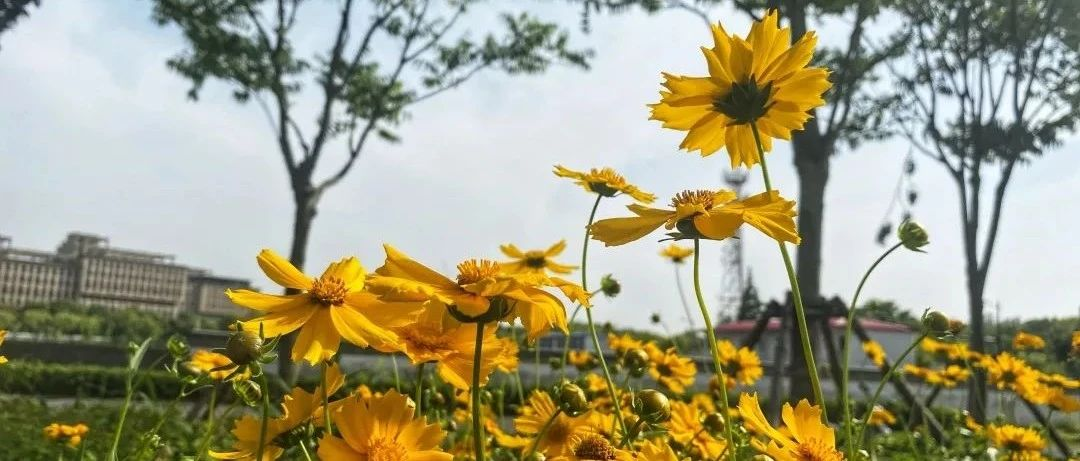 """【探索】石榴花、金鸡菊……临空音乐公园的美景又""""上新""""了!"""
