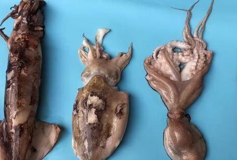 一文读懂鱿鱼、墨鱼、八爪鱼、海兔的区别,4种海鲜的不同吃法