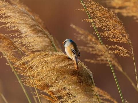小兵张嘎里的芦苇为啥一眼望不到边,读诗词中的芦苇,自然会明白