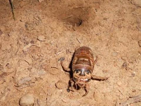 农村常见的金蝉,常年生活在地下,它通过什么判断白天和黑夜?