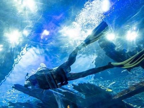 关于海洋的一切想象无锡融创海世界都能实现