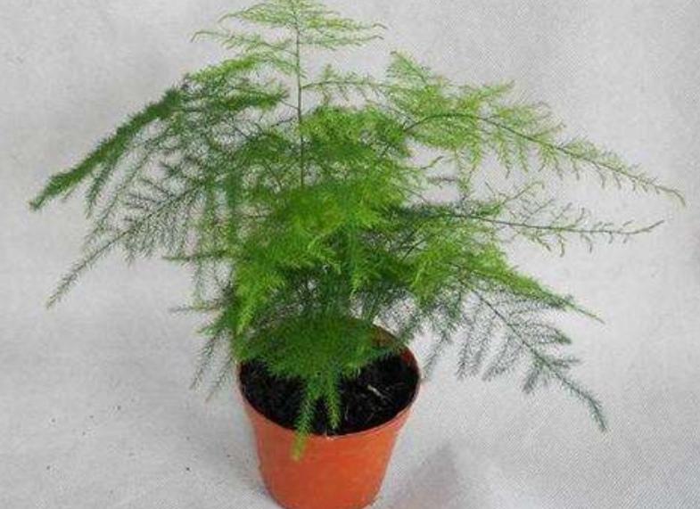 室内养6种小盆栽,姿态优美,清新自然,还能改善空气环境!