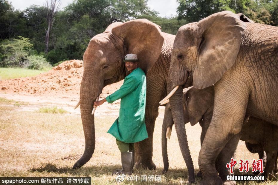 大象㞎㞎能造纸