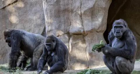 美制药公司研发动物新冠疫苗 动物园计划先为高危动物接种