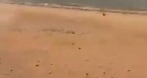 澳大利亚鼠疫横行,老鼠从天而降尸横遍地,宛如生化危机