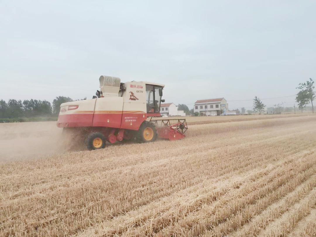 小麦即将收获,黄淮、江淮地区突降大雨,产量和价格是否受影响?