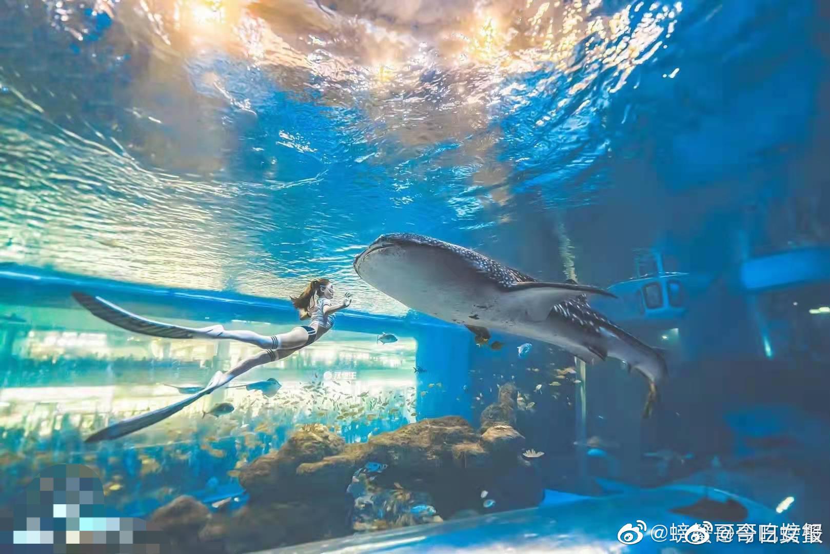 """有网友被问要不要去和鲸鲨拍照,结果听成了和""""金莎""""拍照……"""