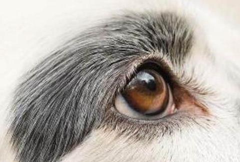 心理测试:你认为哪只是狗的眼睛?测你的心理年龄究竟有多大
