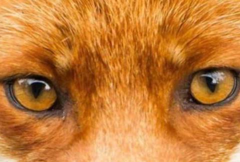 心理测试:你认为哪只是狗的眼睛?测你看人的眼光准不准