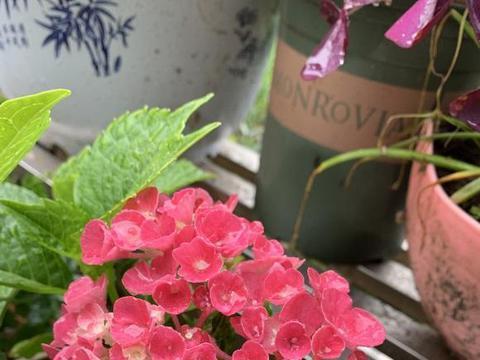 买花可别花冤枉钱,一份花卉报价表,做个参考,买花不吃亏