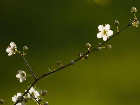 五月末心花怒放,睡到自然醒,三大生肖爱情兴旺事业兴旺