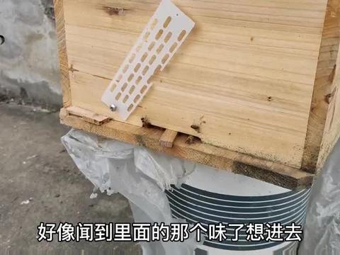 晚上蜜蜂都在干啥?检查的时候发现进出口和透气口全都爬满了!