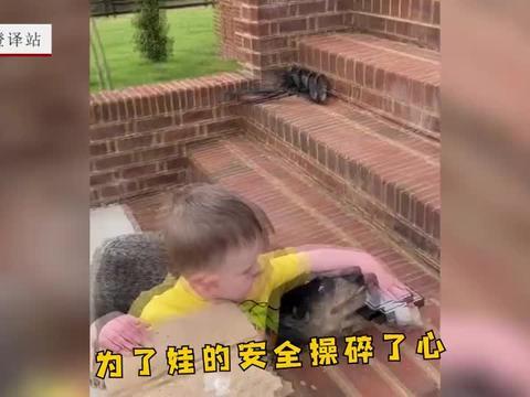 人类幼崽刚学会走路,狗子操碎心,一到有台阶的地方就挡在前面