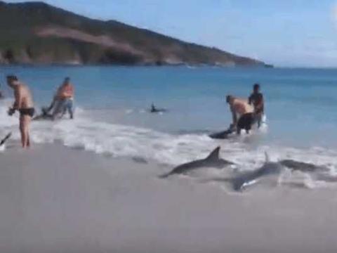 男子海边游泳,一群黑色生物被海浪吹来,仔细看后丢回海中