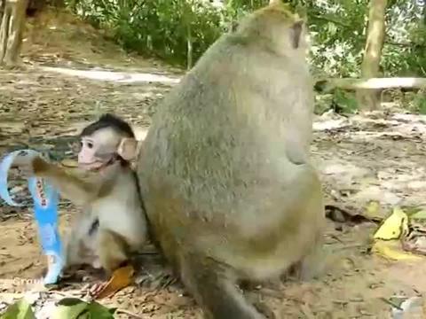 猴子乖宝宝罗拉,请求妈妈喝水