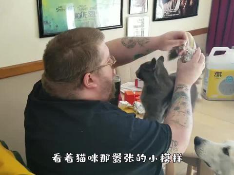 偷八爪鱼上瘾的猫咪,被攻击也不撒嘴,结局让人意外
