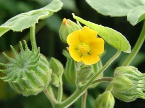 若在家乡有幸见到这2种植物,请好好珍惜,价值珍贵,可遇不可求