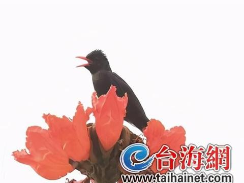 """厦大翔安校区鸟类种数记录刷新至131种 多种鸟类首次被""""发现"""""""