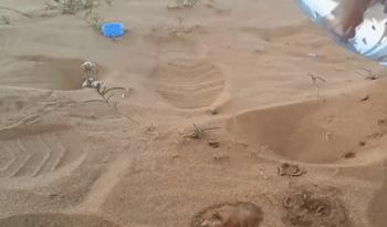 男子给沙漠做实验,用水浇沙子,接下来让他目瞪口呆!