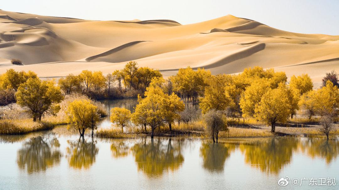 胡杨林千年不朽的神话和沙海一往无边的苍凉壮美……