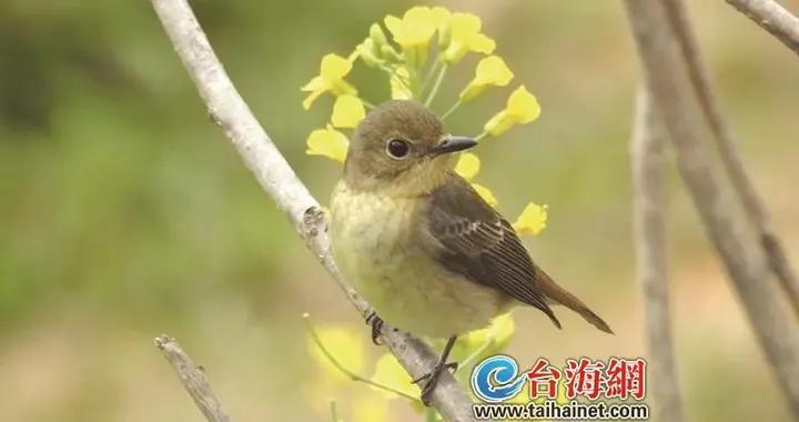 厦大翔安校区鸟类种数记录刷新至131种「组图」
