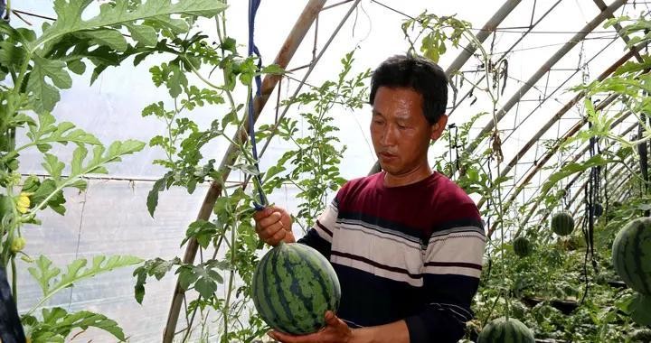 阿克塞县现代农业科技示范园区
