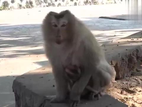 猴子宝宝在猴妈妈怀里哭泣,它好像受了很大的委屈