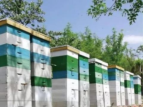 怎么组织和管理多箱体蜂群