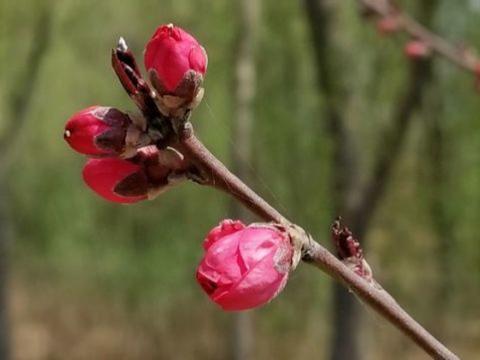 农历四月持续走上坡路的3生肖,霉运烦恼少,福缘喜事多,不差钱