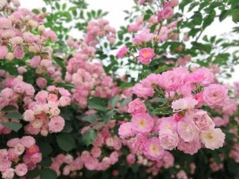 冬季还开花,这几种花养在家中,清新雅致花色繁多易爆盆
