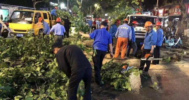 强降雨多处树木断落倒伏,南京鼓楼城管第一时间排险