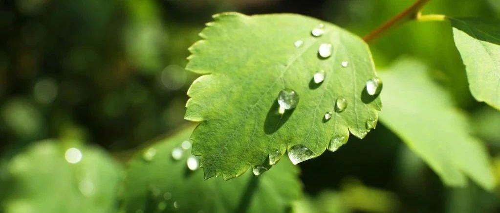 小辽说天气丨雨水抵达,气温下降,注意调整着装!