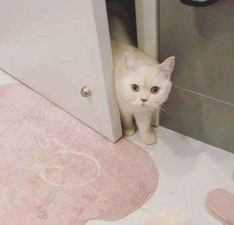 """猫咪为什么喜欢""""偷看""""主人去卫生间?"""