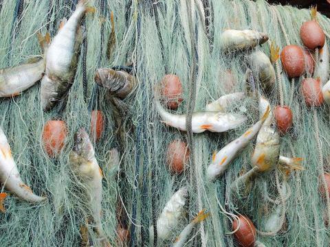 经常吃鱼肉能健脑、护心脏,营养师建议,3种鱼别随便吃